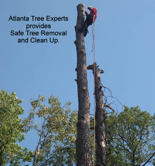 Safe Tree Removal in Atlanta