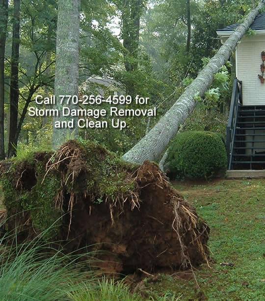 Arbors Of East Atlanta: Atlanta Tree Arbors Specialize In