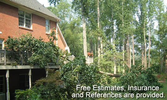 Tree removal in Alpharetta, GA